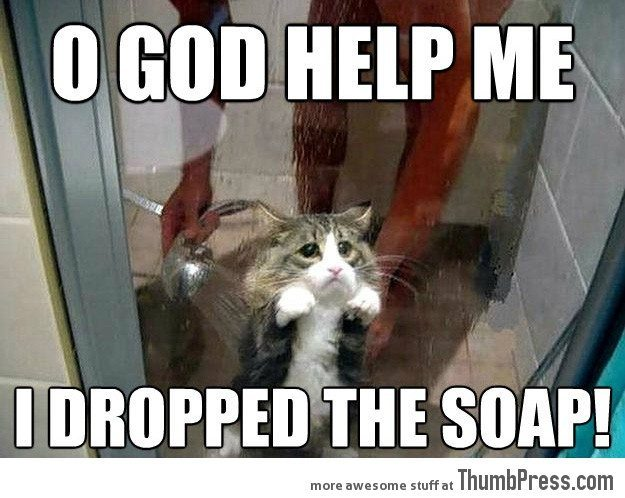Most funny animal memes and humor pics 1