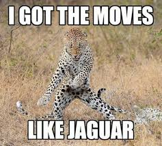 Most funny animal memes and humor pics 10
