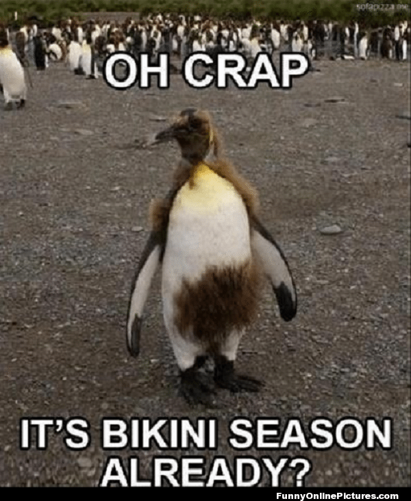 Most funny animal memes and humor pics 15