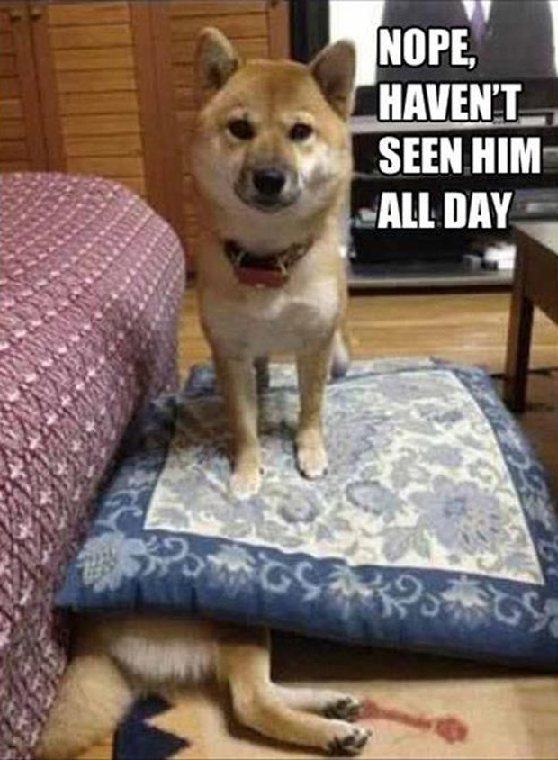 Most funny animal memes and humor pics 16