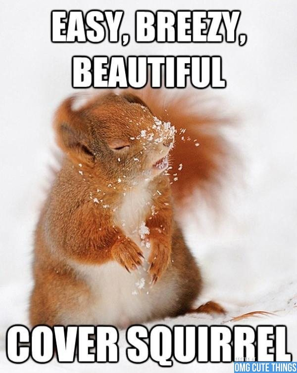 Most funny animal memes and humor pics 3