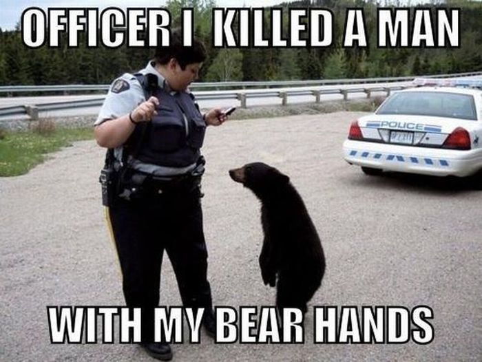 Most funny animal memes and humor pics
