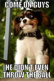 Most funny animal memes and humor pics 5