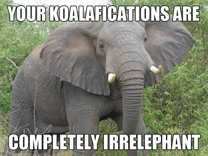 Most funny animal memes and humor pics 8