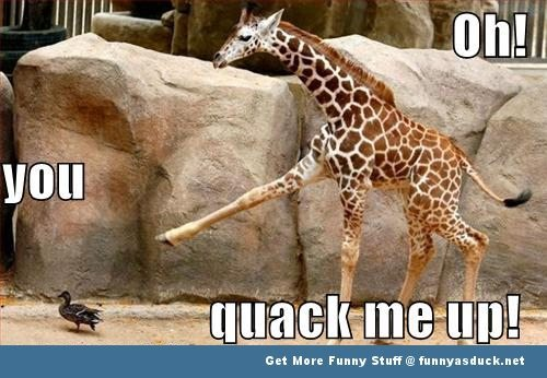 Funny Zoo Meme : Most funny animal memes and humor pics quotes