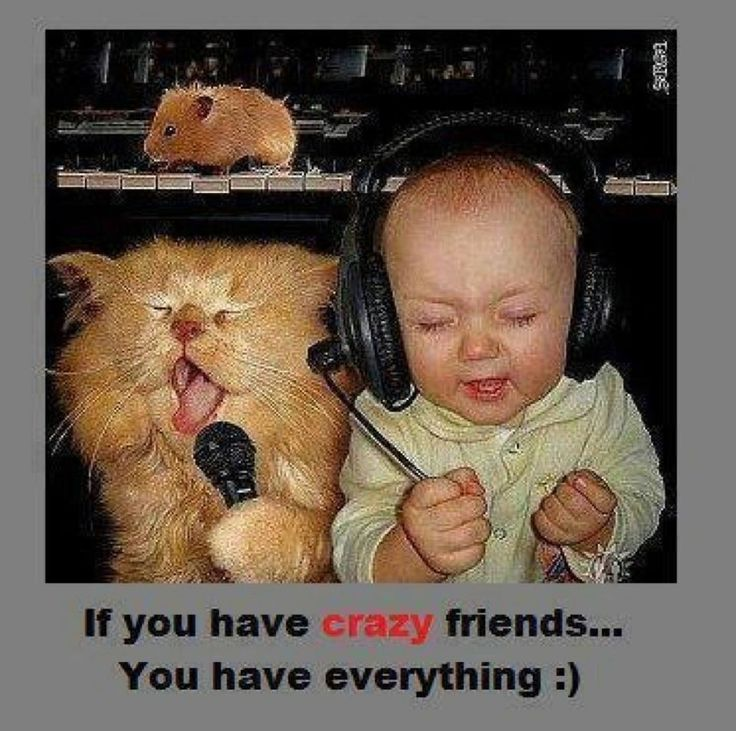 Best Friendship Quotes Funny sayings