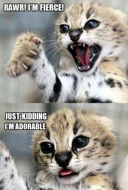 Funniest humor pics