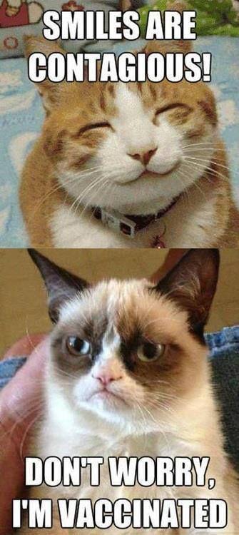 Grumpy cat funny ,