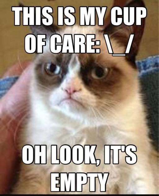Hilarious grumpy cat