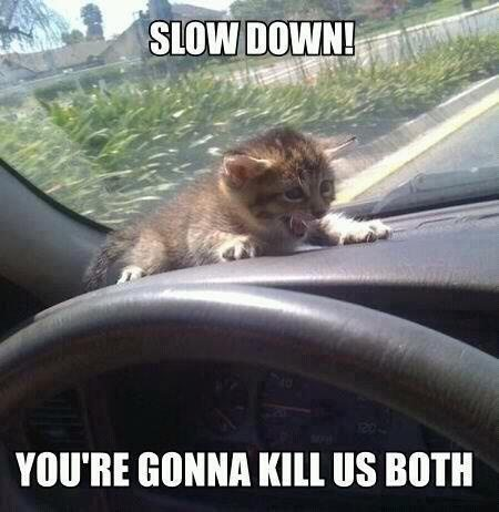 25 Best Funny animal Quotes and Funny Memes | Quotes and Humor Hilarious Animal Memes