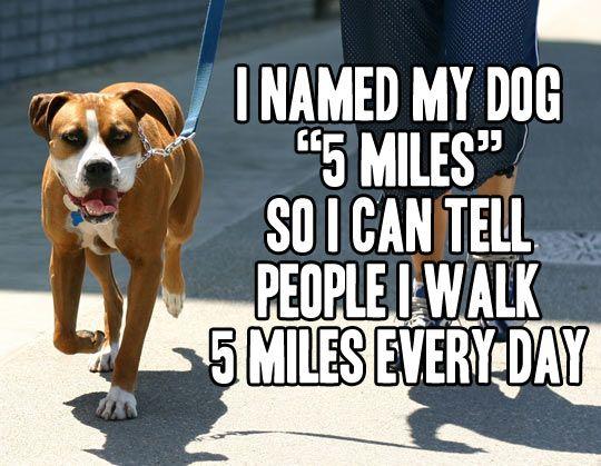 Best funny pictures of week humor