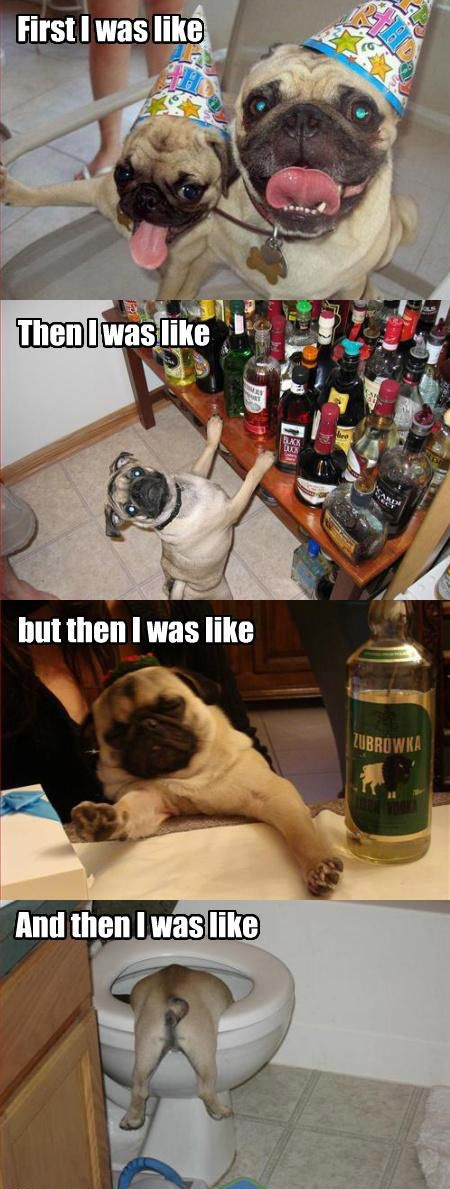 Top 25 Funny Animal Memes #Humor