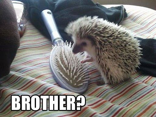 Top 25 Funny Animal Pics #Funny