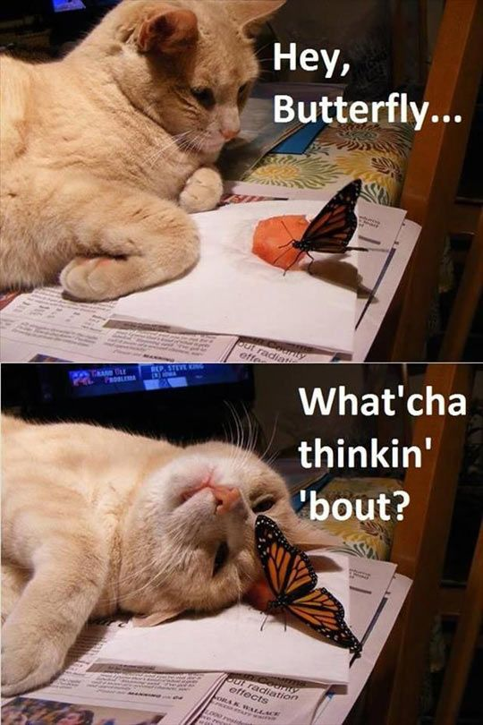 Top 25 Funny Animal Pictures #Funny