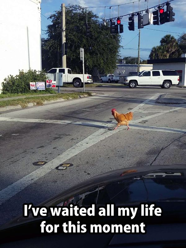 Top 20 Most Funny Pictures Collection #Funny