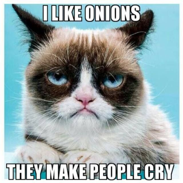 Top 40 Funny Grumpy cat Pictures