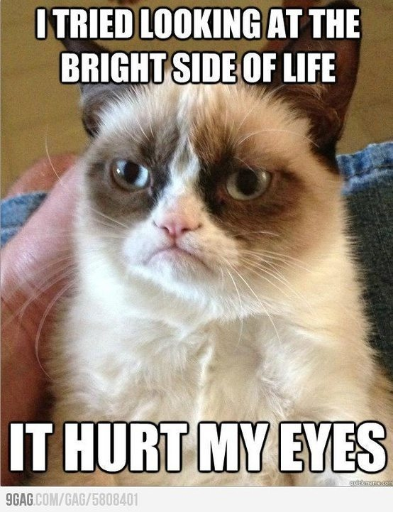 Top 40 Most Funny Grumpy Cat Images with captions #Humor