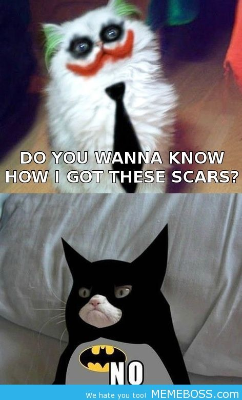 Top 40 Most Funny Grumpy Cat Images with captions