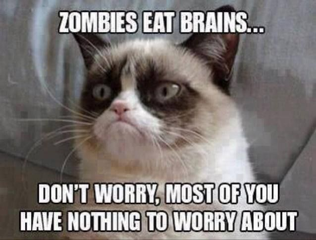 Funny Pictures Quotes Memes Funny: Top 40 Funny Grumpy Cat Pictures And Quotes