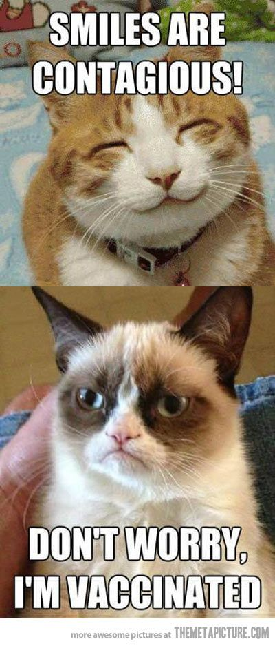 Top 40 most funniest grumpy cat pics #Funny #Quotes