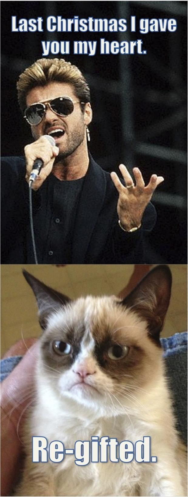 Top 40 most funniest grumpy cat pics #Funny #sayings