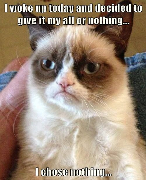 Top 40 most funniest grumpy cat pics #Quotes