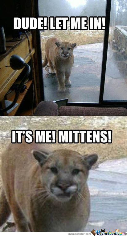 Top 30 Funny Animal Quotes and Pics #Funny memes