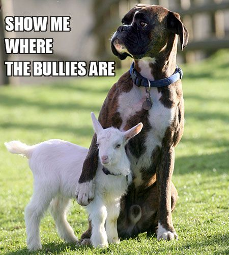 Top 30 Funny Animal Quotes and Pics #Hilarious