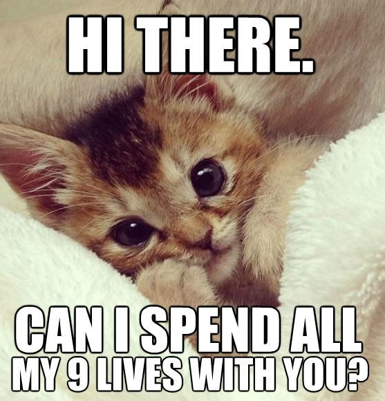 Top 30 Funny Animal Quotes and Pics – Quotes and Humor