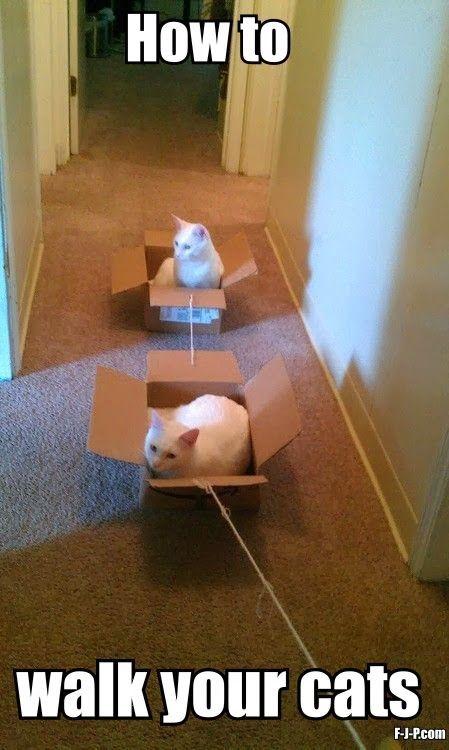 Top 30 Funny Cat Memes #Funny cats