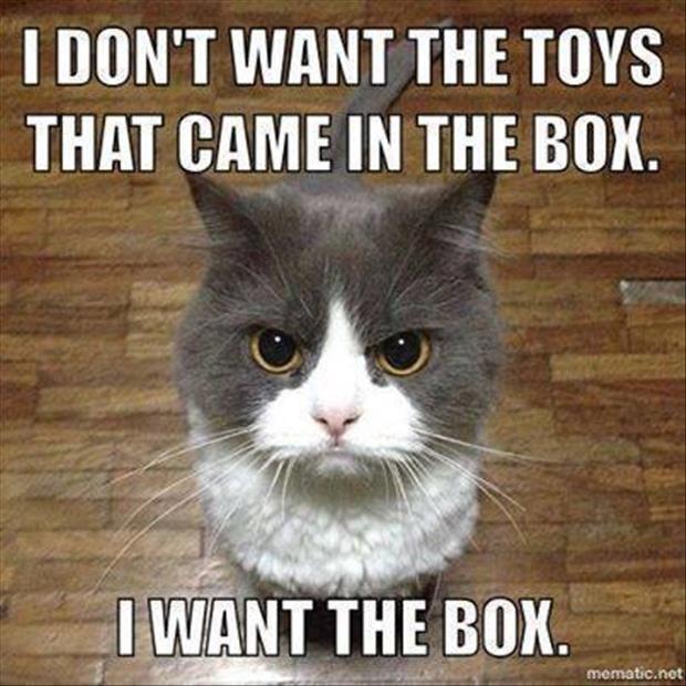 Top 30 Funny Cat Memes #Funny humor