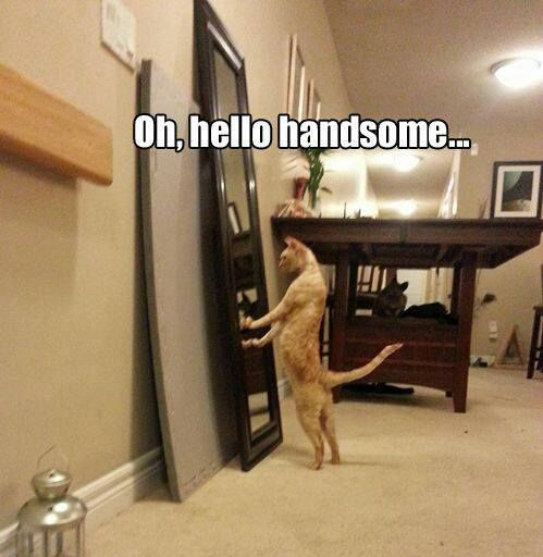 Top 30 Funny Cat Memes #Funny kittens