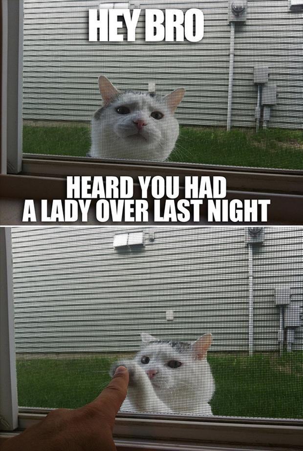 Top 30 Funny Cat Memes #Jokes