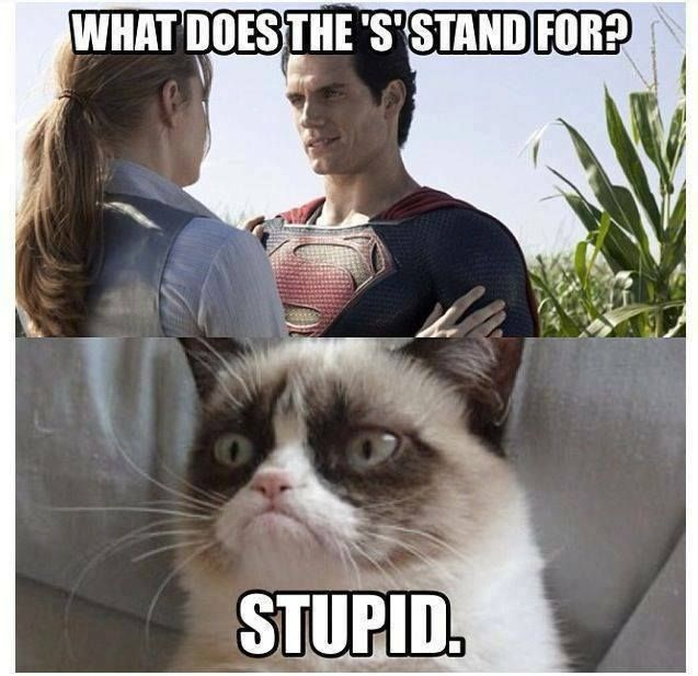 Top 30 Funny Cat Memes #images