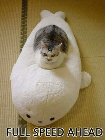 Top 30 Funny Cat Memes #quotes