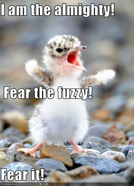 Top  Very Funny Animals Memes Funnies