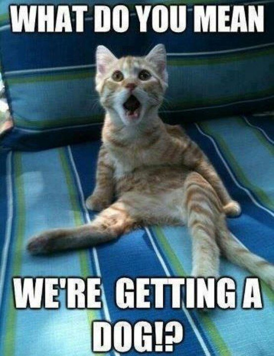 Top 30 Funny animal memes and quotes #Funniest #animals