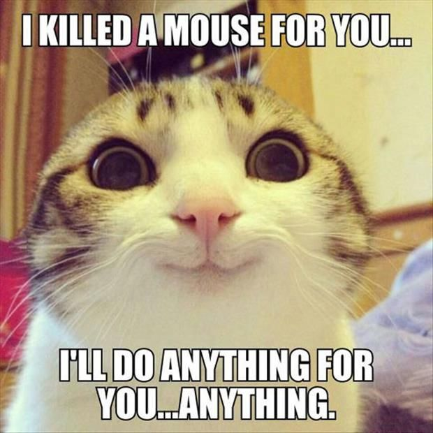 Top 30 Funny animal memes and quotes #Funniest #jokes