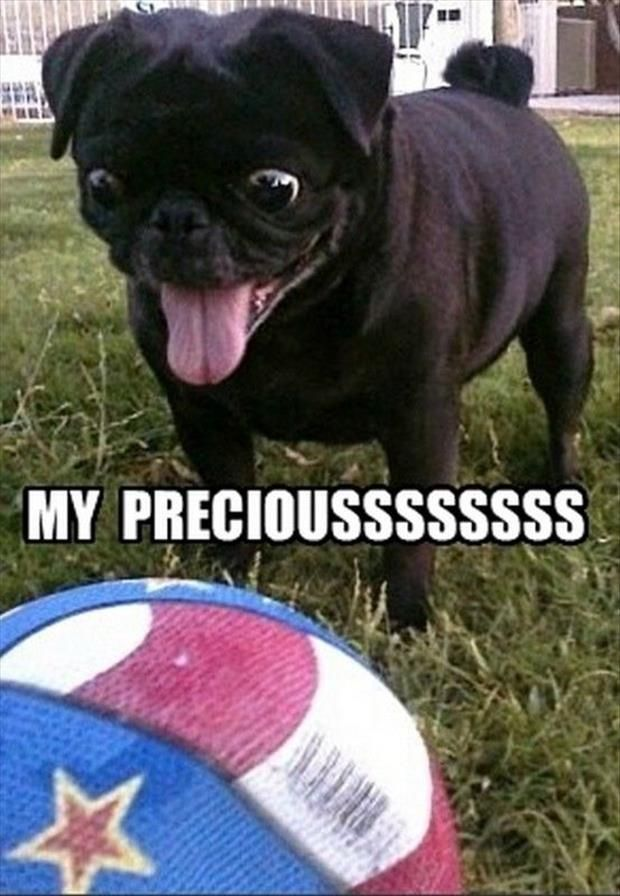 Top 30 Funny animal memes and quotes #animal