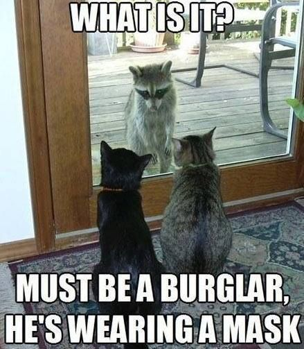 Top 30 Funny animal memes and quotes #animals