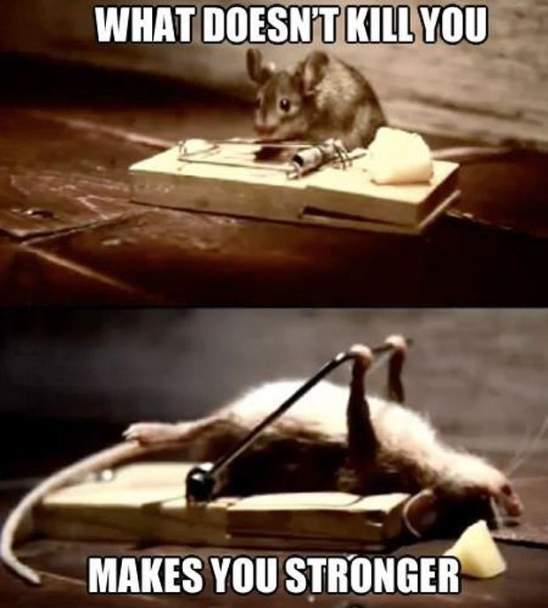 Top 30 Funny animal memes and quotes #funniest