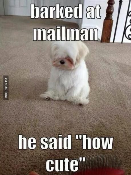 Top 30 Funny animal memes and quotes #funny