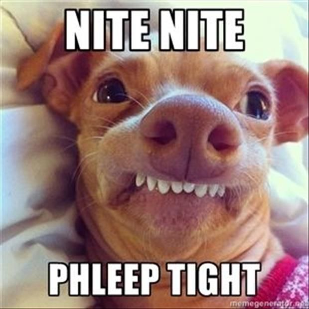 Top 30 Funny animal memes and quotes #humors