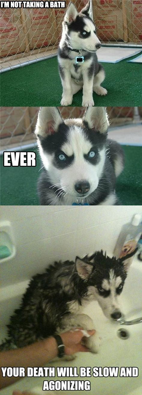 Top 30 Funny animal memes and quotes #joke