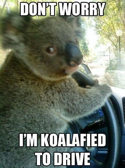 Funny Zoo Meme : Top funny animal memes and quotes humor