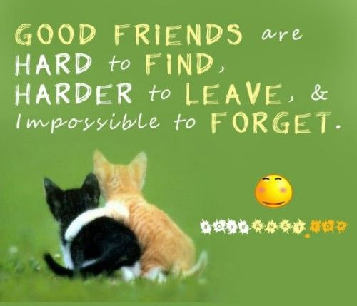 Friendship Quotes Cats: Top 50 Best Friendship Quotes