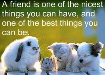 Best 45 Quotes Images of Friendship #ive