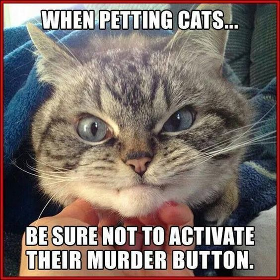 Funny Pictures Meme Cats : Funny animal jokes and memes quotes humor