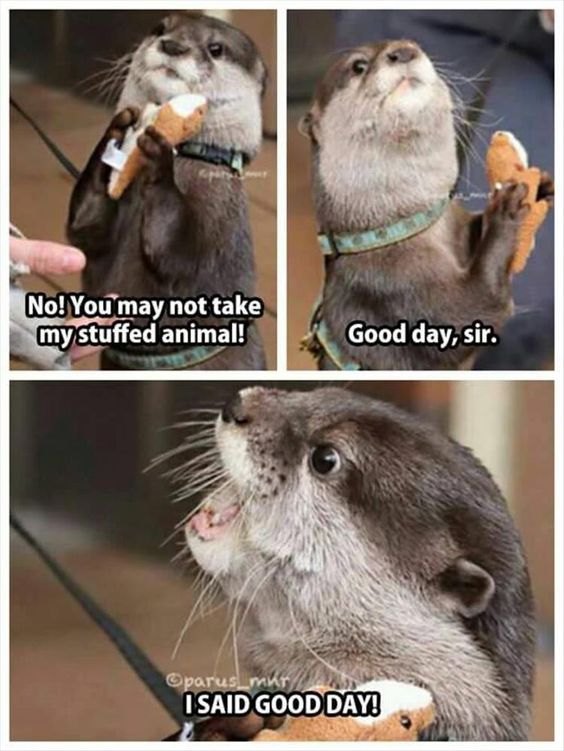 20 Funny Animal Jokes and Memes #Funny #Animals humor