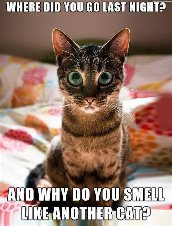 Funny Pictures Meme Cats : Hilarious cat memes quotes and humor